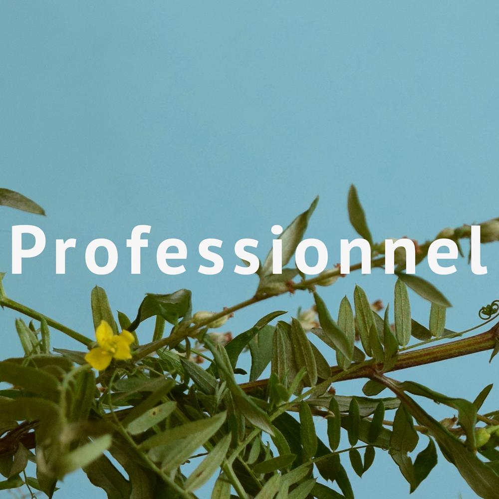 Académie-2017-professionnel